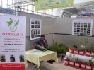 غرفه گیاهان دارویی
