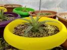 نهال آناناس