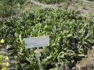 کلکسیون گیاهان داروئی