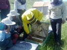 کلاسهای عملی زنبور داری